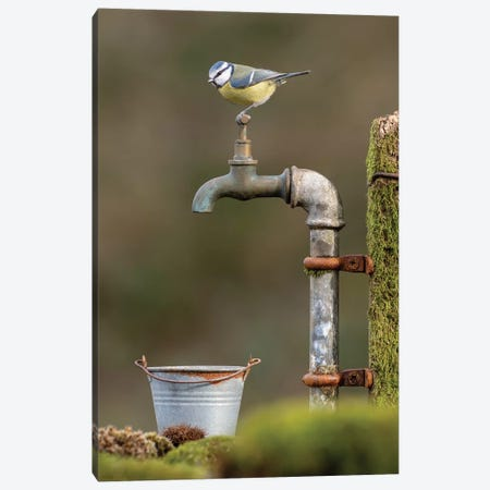 It's Stuck - Blue Tit Canvas Print #DEM45} by Dean Mason Art Print