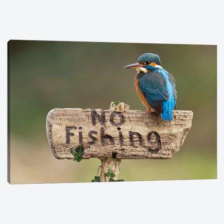 Kingfisher No Fishing 3-Piece Canvas #DEM47} by Dean Mason Art Print