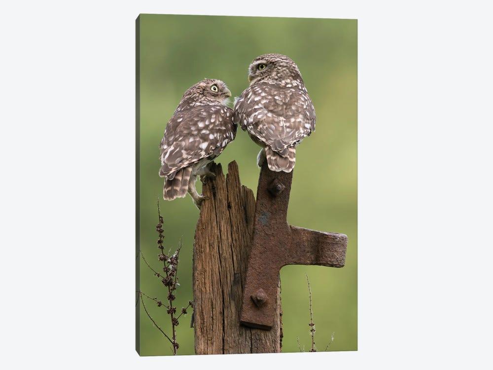 Mr & Mrs.Little Owls by Dean Mason 1-piece Art Print