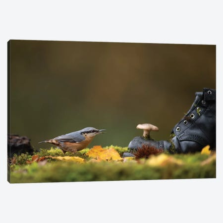 Nuthatch On Woodland Floor Canvas Print #DEM60} by Dean Mason Canvas Artwork