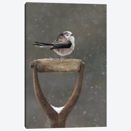 Resting For A While - Long Tailed Tit Canvas Print #DEM69} by Dean Mason Canvas Artwork
