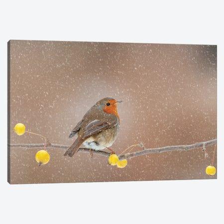 Robin In The Snow Canvas Print #DEM73} by Dean Mason Canvas Art Print