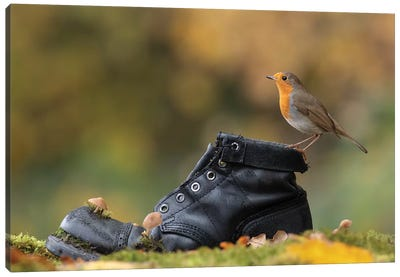 Autumnal Robin On Old Boot Canvas Art Print
