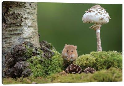 The Flute Player - Harvest Mouse Canvas Art Print