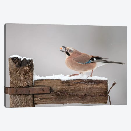 The Juggling Jay Canvas Print #DEM95} by Dean Mason Canvas Art