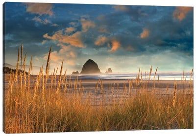 Dune Grass Sunrise Canvas Art Print