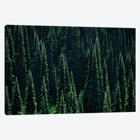 Fir Forest Canvas Print #DEN118} by Dennis Frates Canvas Art