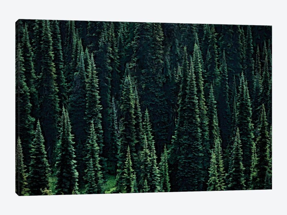 Fir Forest by Dennis Frates 1-piece Canvas Wall Art
