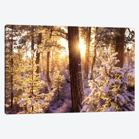 First Snow Canvas Print #DEN120} by Dennis Frates Canvas Art Print