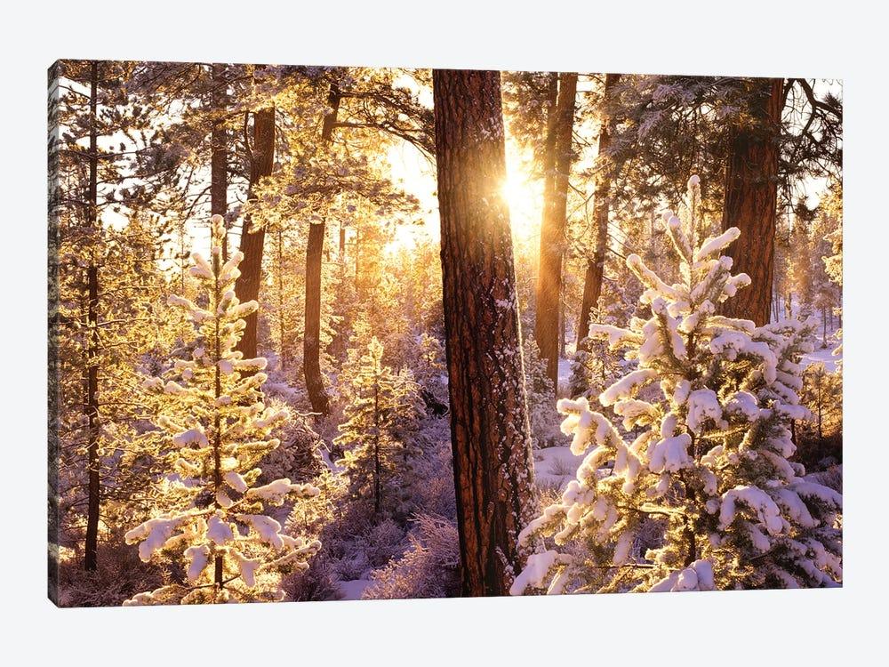 First Snow by Dennis Frates 1-piece Art Print