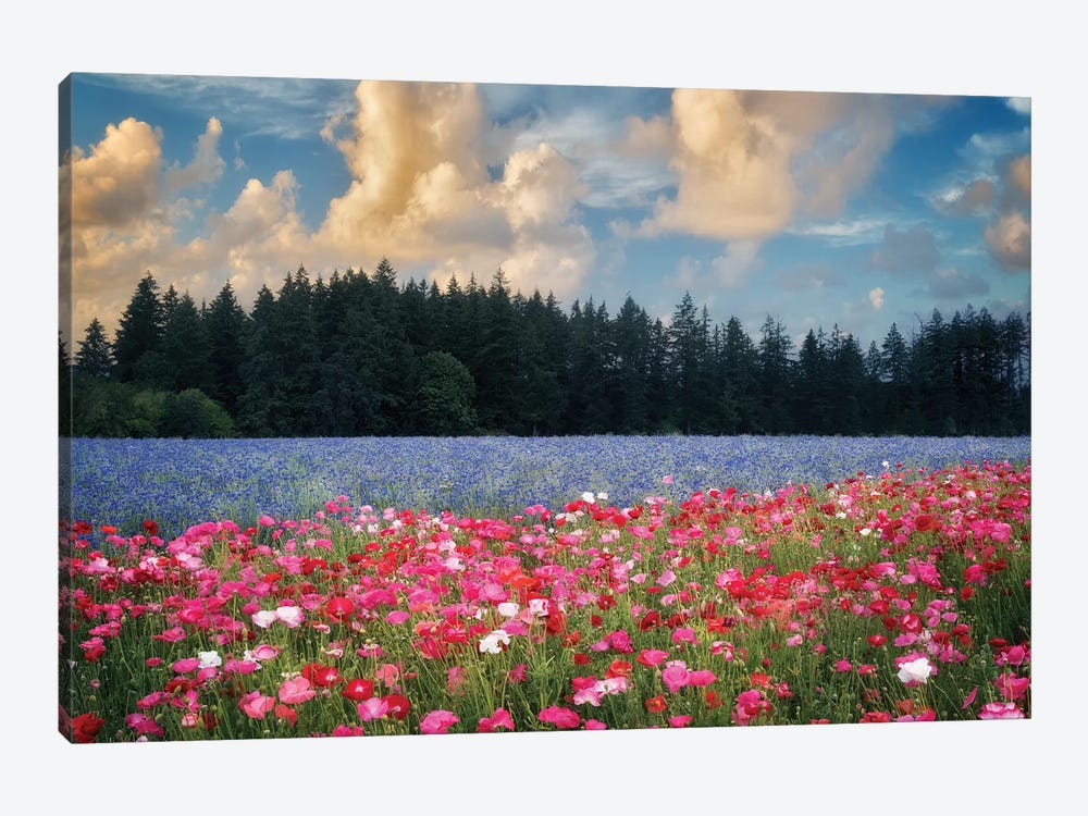 Flower Field Sunrise I by Dennis Frates 1-piece Canvas Art Print