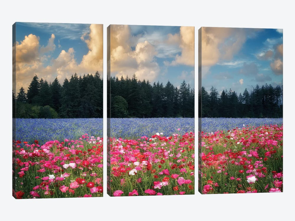 Flower Field Sunrise I by Dennis Frates 3-piece Art Print