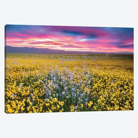 Flower Field Sunrise II Canvas Print #DEN125} by Dennis Frates Canvas Wall Art