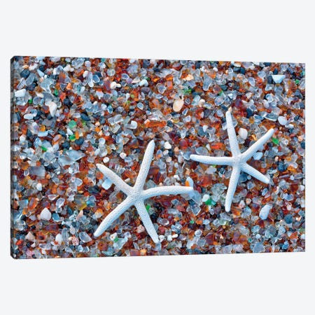 Glass Beach Starfish Canvas Print #DEN134} by Dennis Frates Canvas Art Print