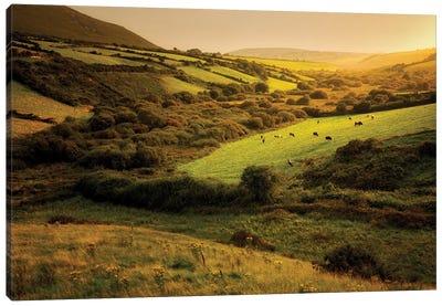 Irish Hillside Canvas Art Print