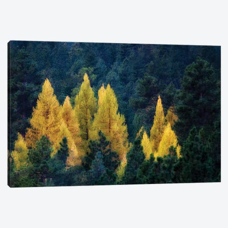 Larch Island Canvas Print #DEN171} by Dennis Frates Canvas Art