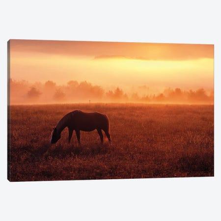 Lone Horse Canvas Print #DEN181} by Dennis Frates Canvas Print