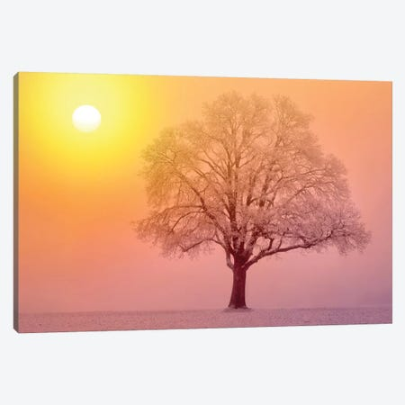 Lone Tree Sunrise Canvas Print #DEN183} by Dennis Frates Canvas Print