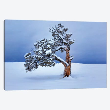 Lone Winter Tree Canvas Print #DEN184} by Dennis Frates Canvas Artwork