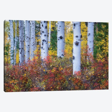 Aspen Color 3-Piece Canvas #DEN19} by Dennis Frates Canvas Wall Art