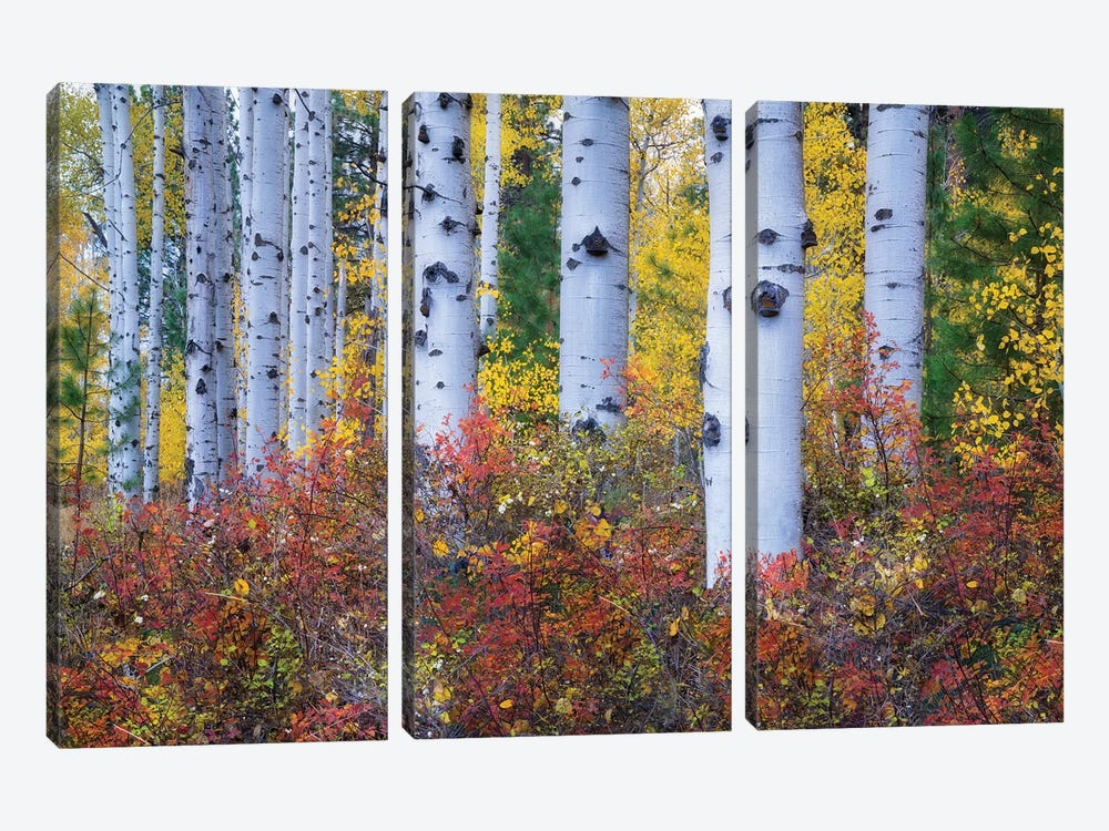 Aspen Color by Dennis Frates 3-piece Canvas Art