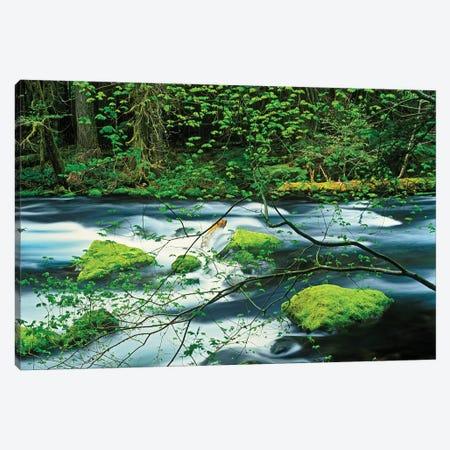 Mossy Stream I Canvas Print #DEN217} by Dennis Frates Canvas Art