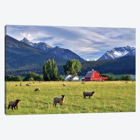 Mountain Sheep Canvas Print #DEN219} by Dennis Frates Canvas Art Print