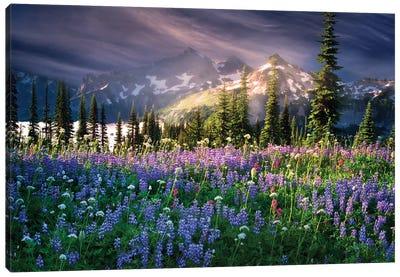 Mountain Wildflowers Canvas Art Print
