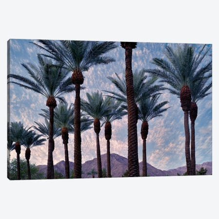 Palm Heads Canvas Print #DEN239} by Dennis Frates Canvas Print