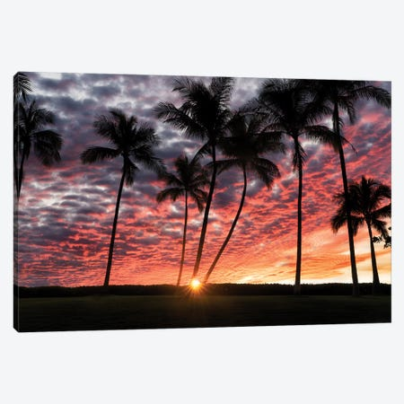 Palm Sunrise Canvas Print #DEN242} by Dennis Frates Canvas Artwork