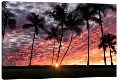 Palm Sunrise Canvas Art Print