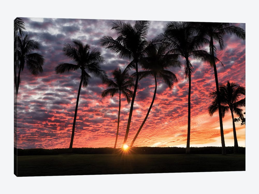 Palm Sunrise by Dennis Frates 1-piece Canvas Print