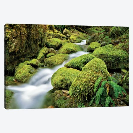 Quiet Stream Canvas Print #DEN266} by Dennis Frates Canvas Art Print