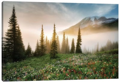 Rainier Wildflowerws Canvas Art Print