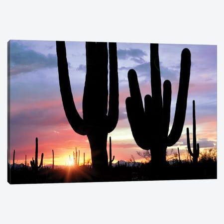 Saguaro Sunset Canvas Print #DEN288} by Dennis Frates Canvas Wall Art