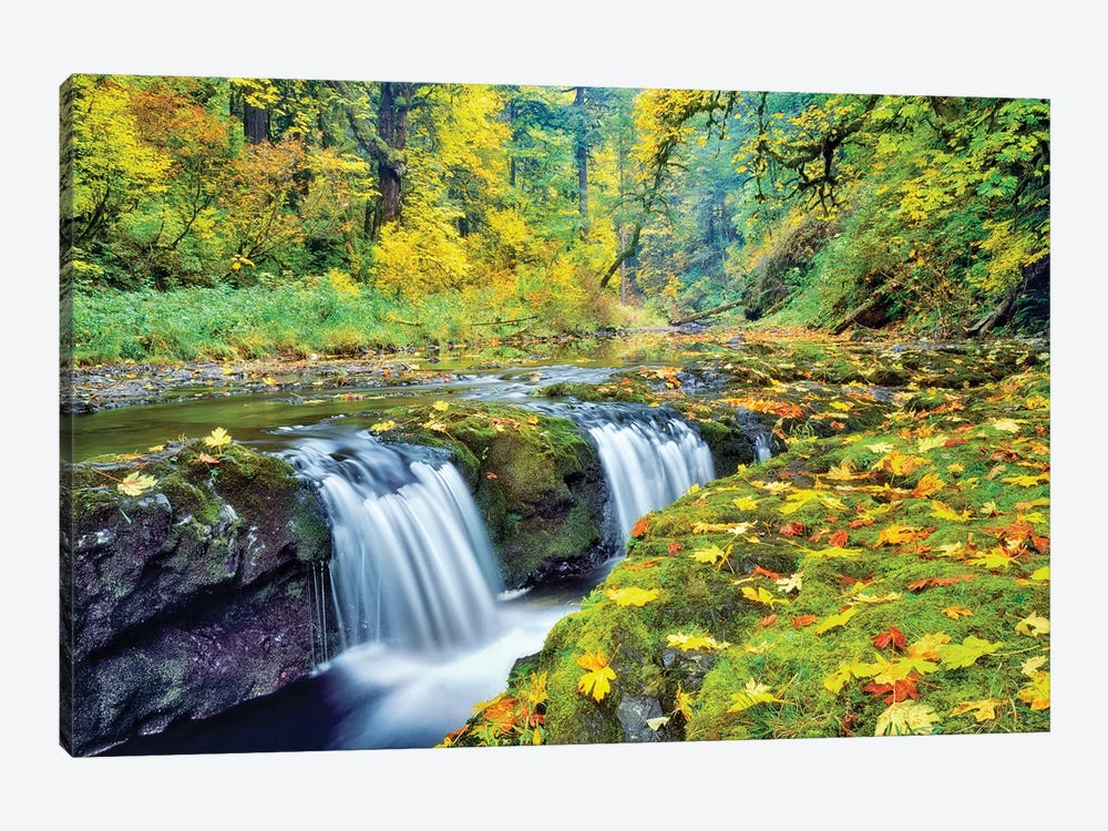 Tiny Falls by Dennis Frates 1-piece Canvas Art