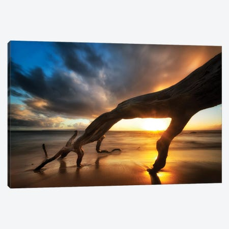 Tree Fingers Sunset Canvas Print #DEN368} by Dennis Frates Canvas Print