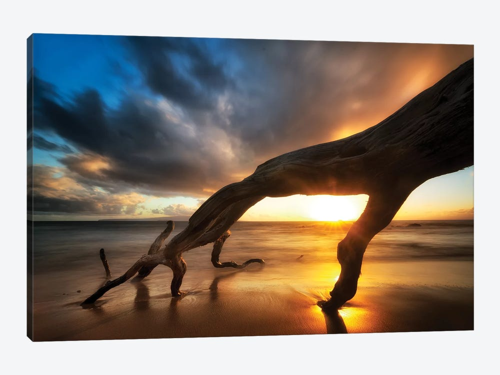 Tree Fingers Sunset by Dennis Frates 1-piece Canvas Art