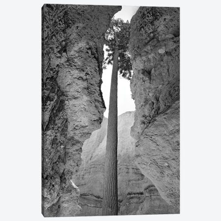 Tree Frame Canvas Print #DEN369} by Dennis Frates Art Print