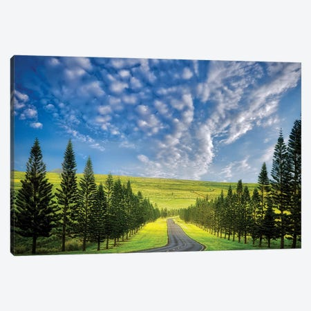 Tree Lined Road Canvas Print #DEN370} by Dennis Frates Canvas Artwork