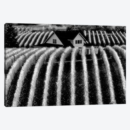 Vineyard Rows 3-Piece Canvas #DEN383} by Dennis Frates Canvas Print