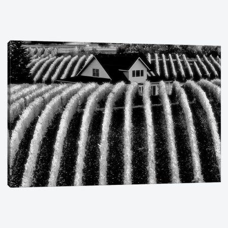 Vineyard Rows Canvas Print #DEN383} by Dennis Frates Canvas Print