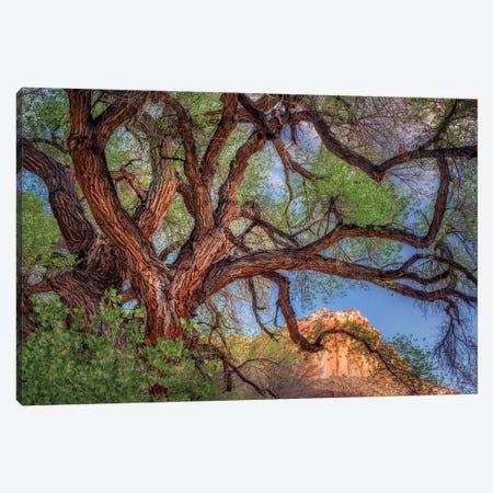 Wild Branching Tree Canvas Print #DEN394} by Dennis Frates Art Print