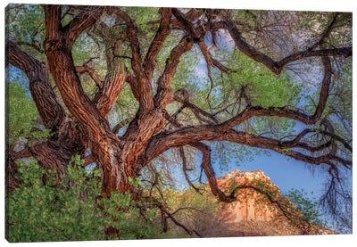 Wild Branching Tree Canvas Art Print