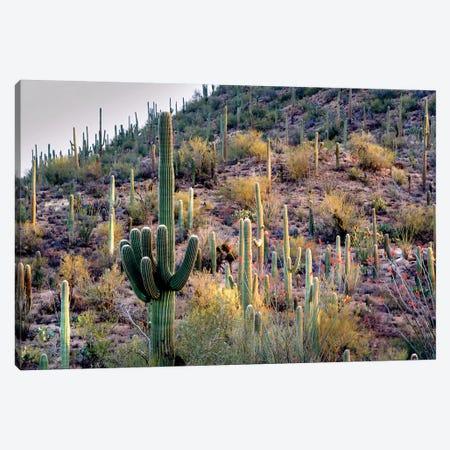 Wild Cactus Garden Canvas Print #DEN395} by Dennis Frates Canvas Print
