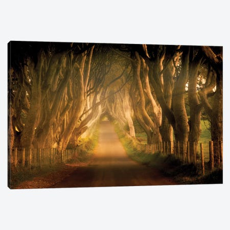 Beech Lane Canvas Print #DEN39} by Dennis Frates Canvas Artwork