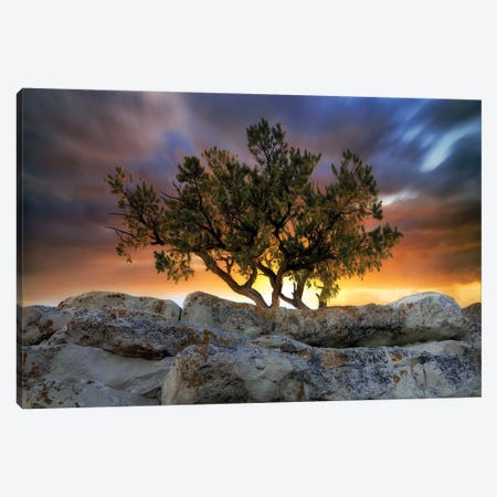 Bonsai Sunrise Canvas Print #DEN42} by Dennis Frates Art Print