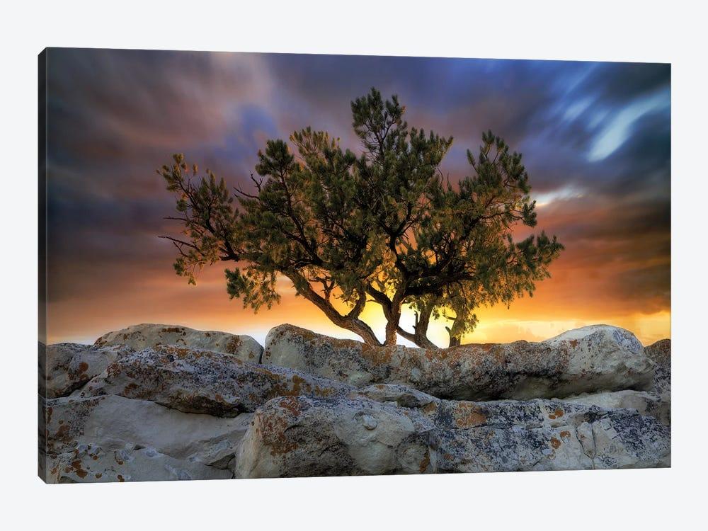 Bonsai Sunrise by Dennis Frates 1-piece Canvas Art