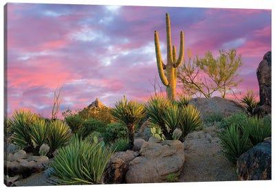 Cactus Garden Sunrise Canvas Art Print