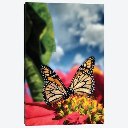 Monarch Butterflies I Canvas Print #DEN593} by Dennis Frates Canvas Art